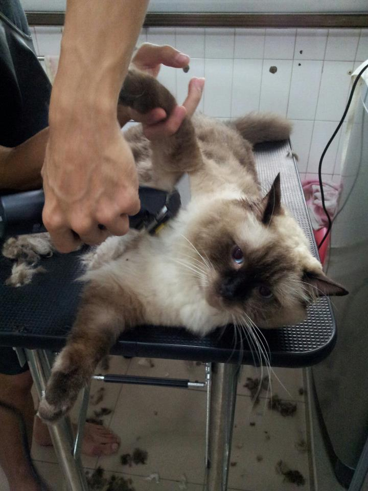 Mobile Pet Grooming Services Singapore